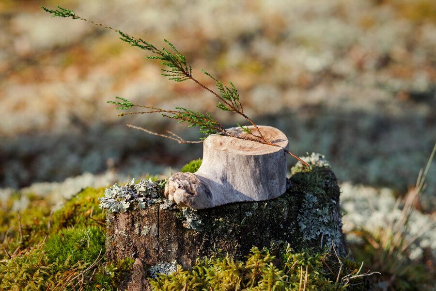 Sauso koku galda kartes/uzraksta turētājs